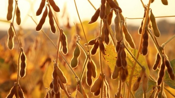 Feed Grains, Feed Ingredients & Soybean Meal for Exports